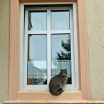 Katze vor Fenster