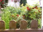 Holzzaun, dahinter blühende Pflanzen